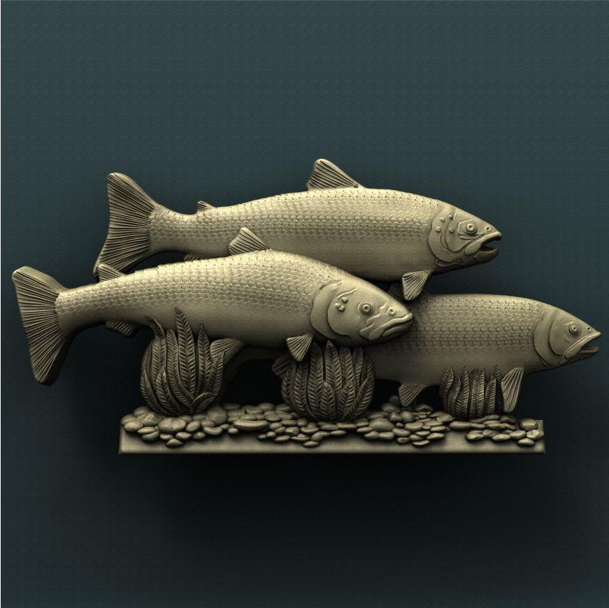 0066. SalmonS
